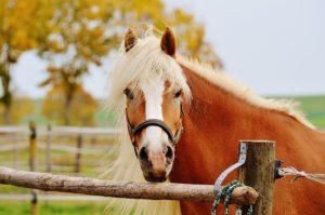 horse-1016451_640